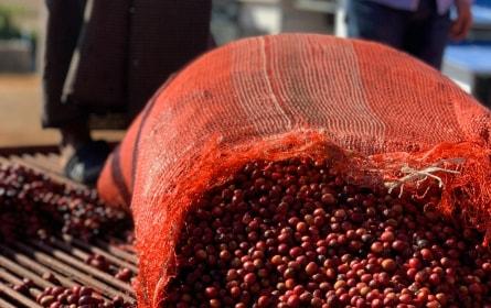 小規模生産者が丁寧に育てた生豆をセレクト